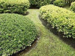 se6 landscaping services catford